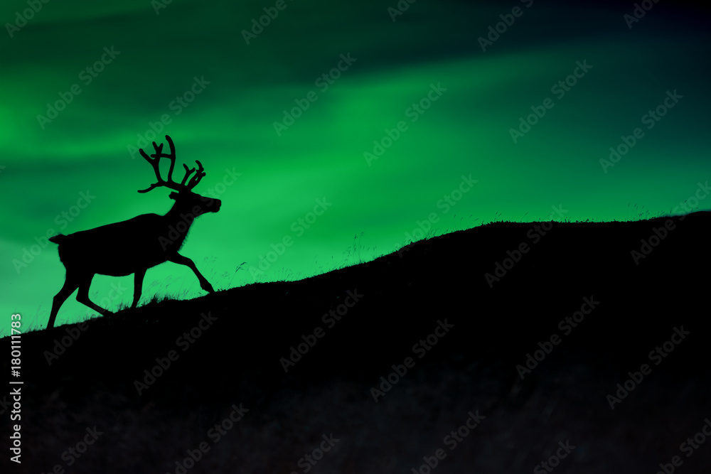 Silhouette of a deer against a background of Borealis shining at night