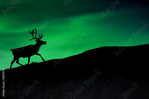 Photo sur Aluminium Aurore polaire Silhouette of a deer against a background of Borealis shining at night