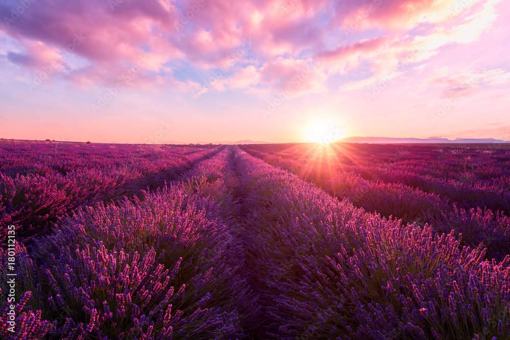 Fototapety, obrazy: Lavender field at sunset light in Provence, amazing sunny landscape with fiery sky and sun, France