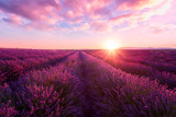 Fototapeta  - Lavender field at sunset light in Provence, amazing sunny landscape with fiery sky and sun, France