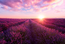 Lavender Field At Sunset Light In Provence, Amazing Sunny Landscape With Fiery Sky And Sun, France