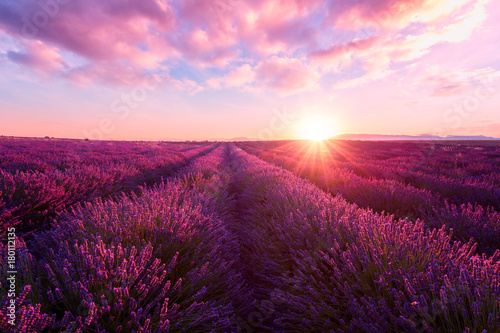 Poster Lavendel Lavender field at sunset light in Provence, amazing sunny landscape with fiery sky and sun, France