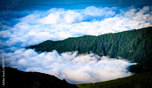Tuinposter Canarische Eilanden Trees in the Clouds