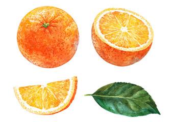 Set of oranges. Watercolor.