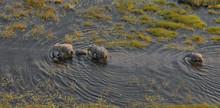 Aerial View Elephants Okavango...