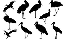 Stork Silhouette Vector Graphics