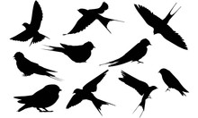 Swallow Silhouette Vector Grap...