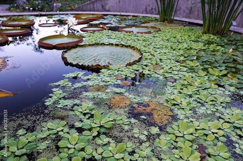 Fotobehang Tuin Teich im botanischen Garten in Zürich in der Schweiz