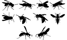 Wasp Silhouette Vector Graphics