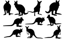 Wallaby Silhouette Vector Grap...