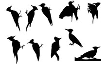 Wood Pecker Silhouette Vector ...