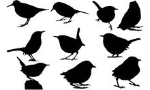 Wren Silhouette Vector Graphics