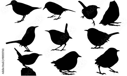 Wren Silhouette Vector Graphics Tablou Canvas
