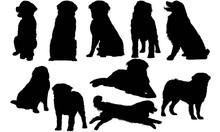 Bernese Mountain Dog Silhouett...