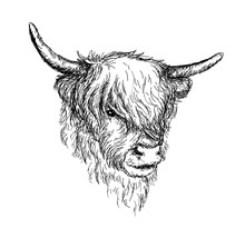 """Illustration Of Beautiful Scottish Rural Animal - Hairy Cow (""""Hairy Coo"""") From Highlands VECTOR"""