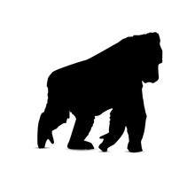 Silhouette Of Walking Gorilla.