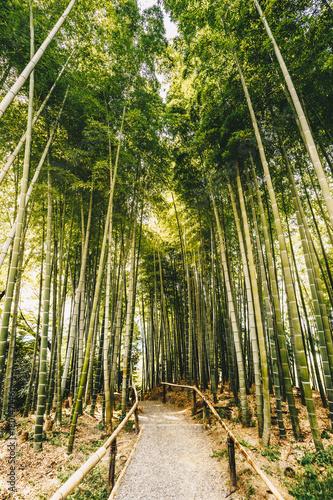 In de dag Bamboo Bamboo forest Arashiyama near Kyoto, Japan
