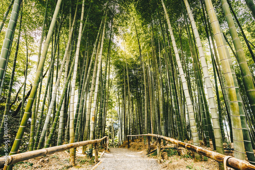 Foto op Canvas Bamboo Bamboo forest Arashiyama near Kyoto, Japan
