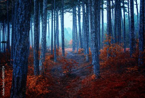 autumn  forest on misty morning