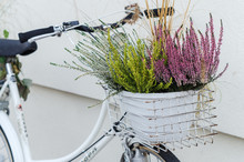 Basket Of Autumn Heather Flowers On White Bike