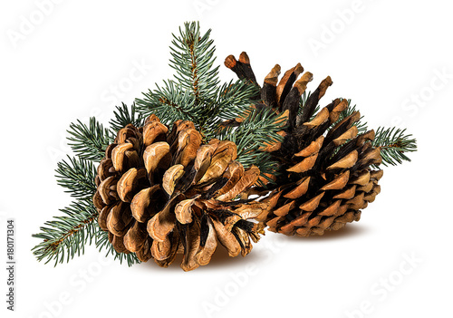Fotografie, Obraz  Brown pine cone on white background with clipping pass