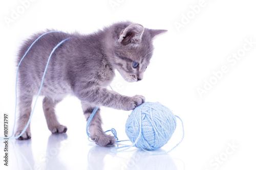 Zdjęcie XXL Kotek na białym tle w studio