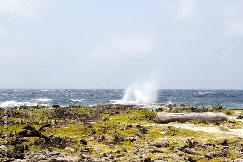 Fotografie, Obraz  Little Blowhole