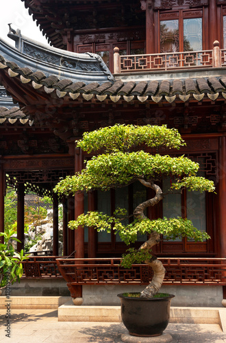 Photo  Decorative bonsai tree in the oriental park with wooden traditional gazebos with