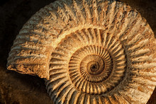 Ammonite With Sidelight
