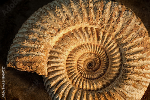 Ammonite with sidelight Canvas Print