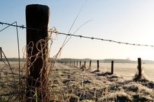 Wintertime In Holland: Barbed ...