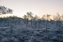A Beautiful Morning Landscape In A Frozen Swamp. Bright, Colorful Sunrise In Frozen Wetlands. Beautiful Autumn Scenery In Latvia.