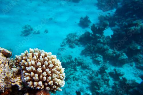 Tuinposter Koraalriffen Coral reef, Red sea