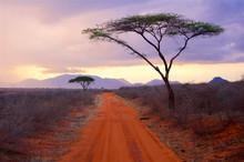 Tsavo National Park Africa Evening