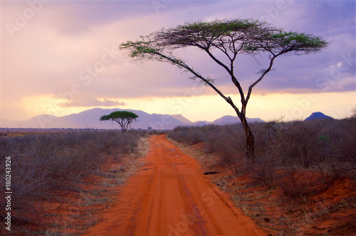 Deurstickers Chocoladebruin Tsavo National Park Africa evening