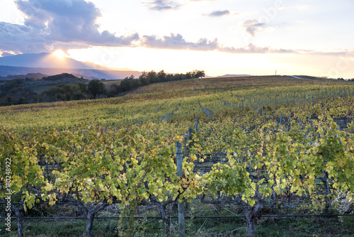 Papiers peints Vignoble vigneto al tramonto