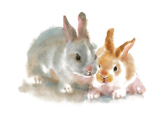 Two Cute Rabbits On White Back...