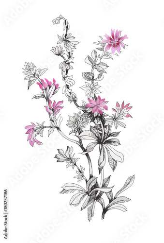 Fototapety, obrazy: hand drawn beautiful wildflowers isolated on white background.