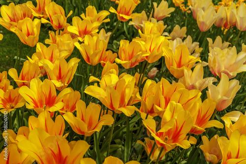 Photo  Beautiful flowers background.