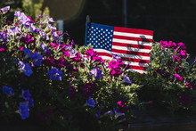 American Flag In Morning Glory...