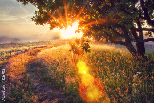 Door stickers Sunset Vivid sun rays through branches of tree on morning meadow at sunrise. Bright dawn with shining sunbeams.