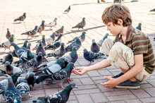 The Boy Feeds The Pigeons In T...