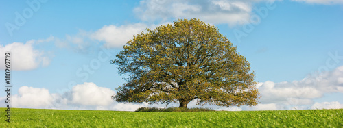 Aluminium Prints Blue autumn landscape with oak tree and blue sky