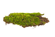 Moss On A Log, Isolated On A W...