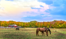 Autumn Landscape Of Horses Gra...