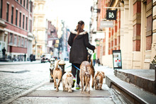 Dog Walker Manhattan City Urban