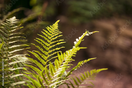 Farn Giftige Pflanzen Im Garten Buy This Stock Photo And Explore