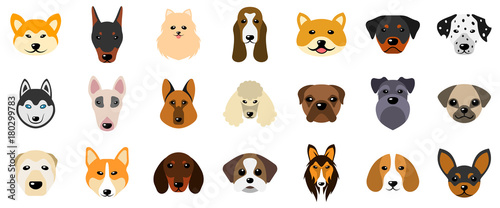 Fotografia Set Heads of Dogs, Collection Different Breeds of Canines, Isolated on White Bac