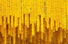 Yellow Marigold Flower Backgro...
