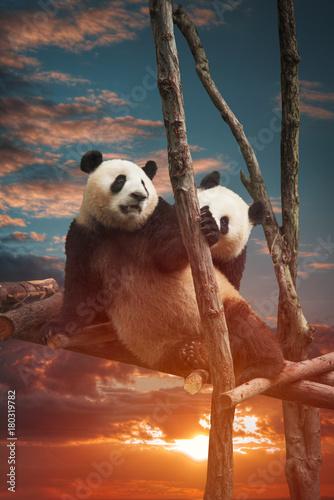 Foto auf Gartenposter Pandas Big panda